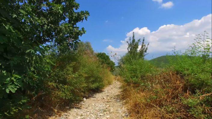 Şifa Girinci - The Path