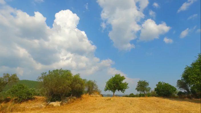 Şifa Girinci - The Tree